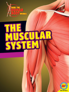 HTHBW-Muscular-System
