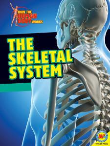 HTHBW-Skeletal-System
